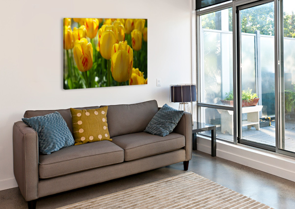 SPRING BLOOMS OF HOLLAND 1 OF 8 24  Canvas Print