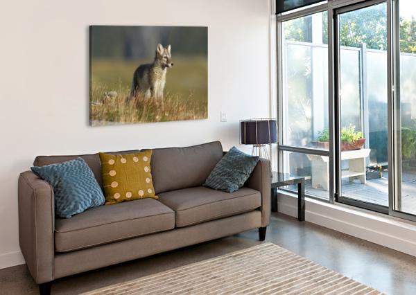 ARCTIC FOX PUPPIE BY KAREN KOLBECK  1X  Canvas Print