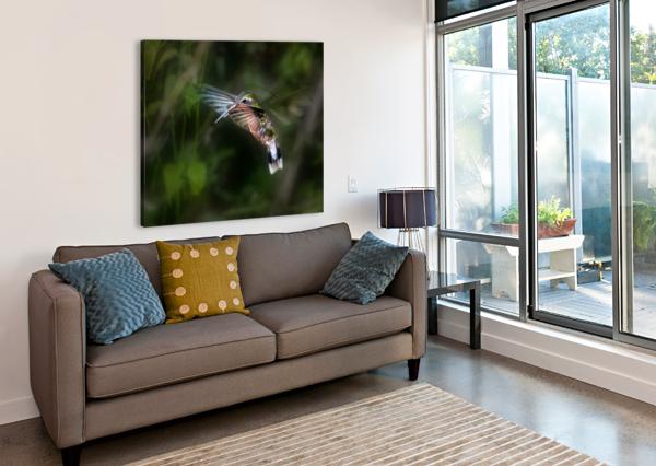 HUMMINGBIRD 1B BY LEIGH PELTON  1X  Canvas Print