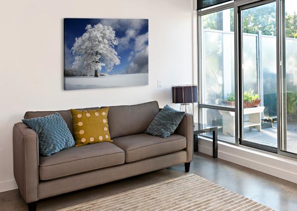 WHITE WINDBUCHE IN BLACK FOREST 1X  Canvas Print