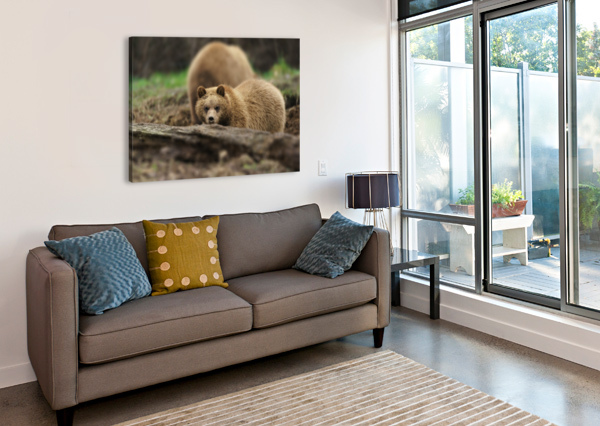 GRIZZLY BEAR WESLEY ALLEN SHAW  Canvas Print
