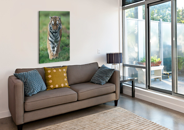 SIBERIAN TIGER WESLEY ALLEN SHAW  Canvas Print