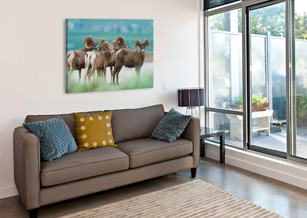 BIGHORN SHEEP WESLEY ALLEN SHAW  Canvas Print