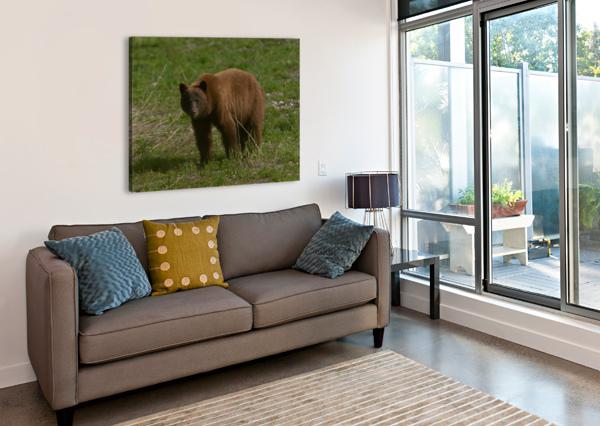 CINNAMON BLACK BEAR WESLEY ALLEN SHAW  Canvas Print