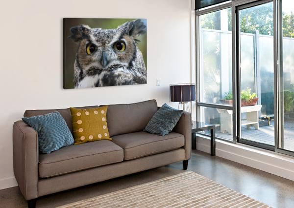 OWL  5 JODI WEBBER  Canvas Print