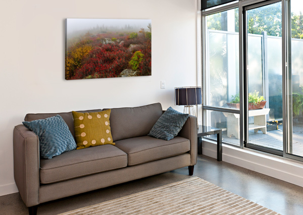 BEAR ROCKS PRESERVE APMI 1803 ARTISTIC PHOTOGRAPHY  Canvas Print