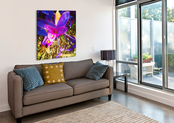 PINK AND PURPLE PIERCE ANDERSON  Canvas Print