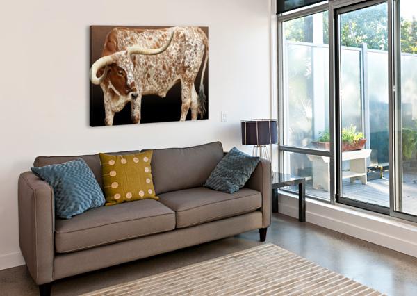 LONGHORN STEER PROFILE 7X5 STUDIO DALIO  Canvas Print