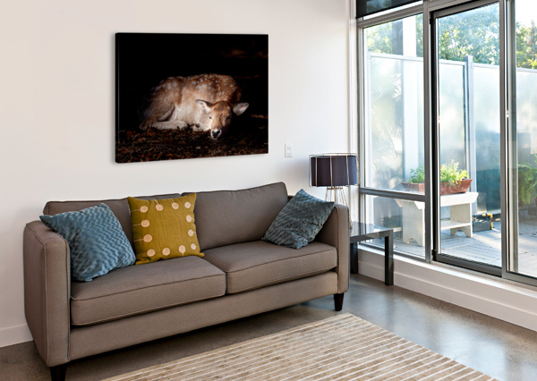 FALLOW DEER 2 ERIC FRANKS PHOTOGRAPHY  Canvas Print