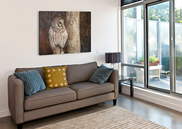 BARRED OWL IN GRUNGE MICHEL SOUCY  Canvas Print