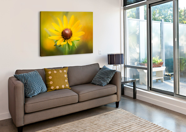 BROWN EYED SUSAN MICHEL SOUCY  Canvas Print