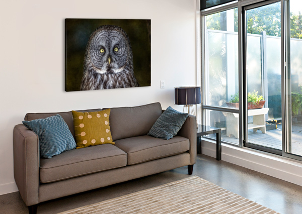 STARE DOWN WITH A GREAT GREY OWL MICHEL SOUCY  Canvas Print