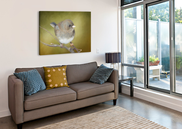 DARK EYED JUNCO WITH TEXTURE MICHEL SOUCY  Canvas Print