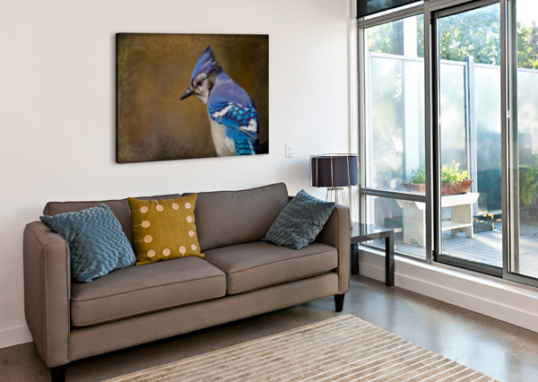 BLUE JAY WITH TEXTURE MICHEL SOUCY  Canvas Print