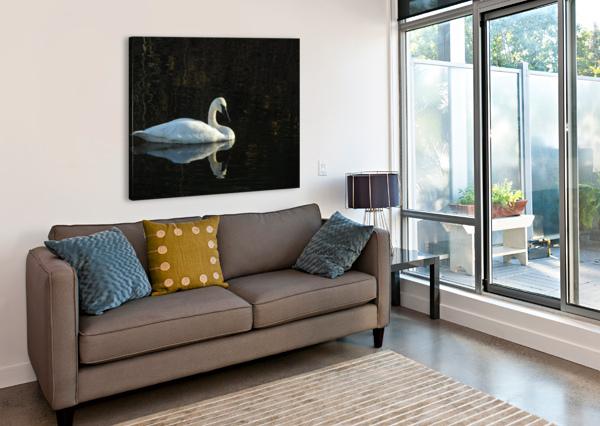 TRUMPETER SWAN AT ESTUARY J  JASMYN PHILLIPS  Canvas Print