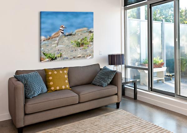KILLDEER ON THE BEACH J  JASMYN PHILLIPS  Canvas Print