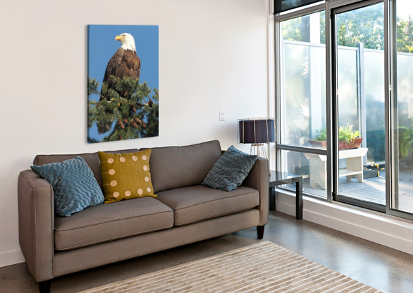 BALD EAGLE AT HERRING SEASON  J  JASMYN PHILLIPS  Canvas Print