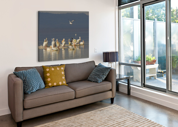 PELICANS OF THE SALTON SEA J  JASMYN PHILLIPS  Canvas Print