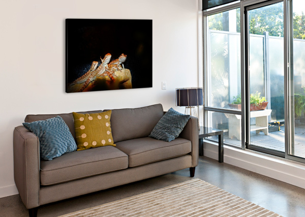 REPTILE MOVIE STARS DON  BAKER  Canvas Print
