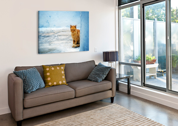 CAT CHRISTOPHER DORMOY  Canvas Print