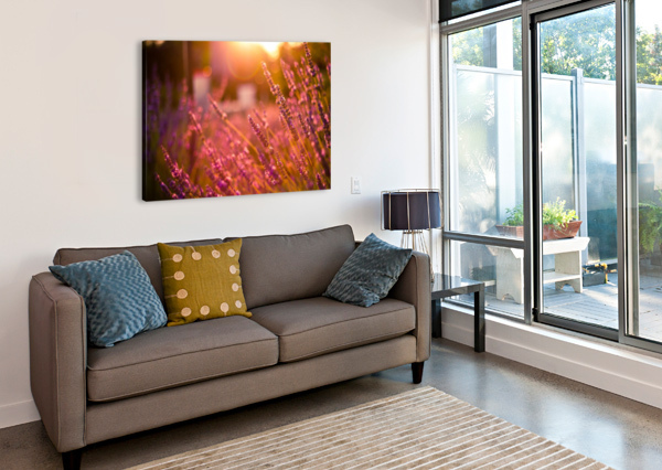 SUNSET LAVENDER FLOWERS LEVENTE BODO  Canvas Print