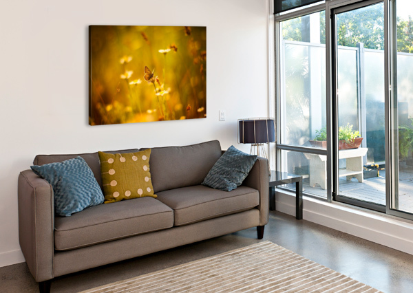 GOLDEN SUNSET. DAISY AND BUTTERFLY LEVENTE BODO  Canvas Print