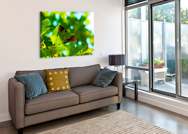 RESTING ON A MAPLE LEAF DON  BAKER  Canvas Print