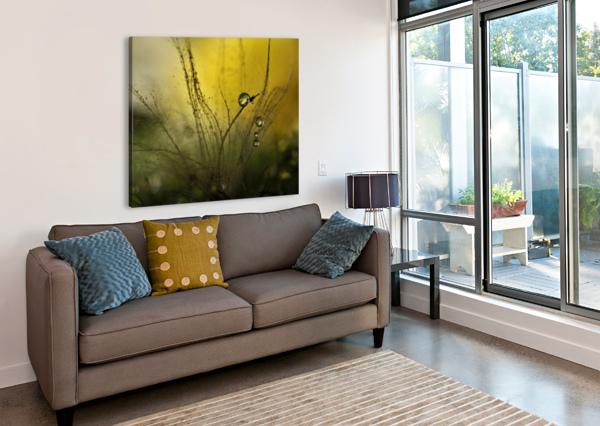 A GOLDEN MORNING SHOWER 1X  Canvas Print
