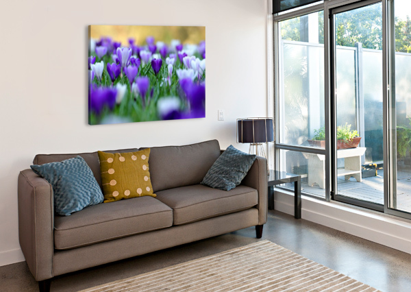 AMONGST THE CROCUSES ANDREW TURNER  Canvas Print