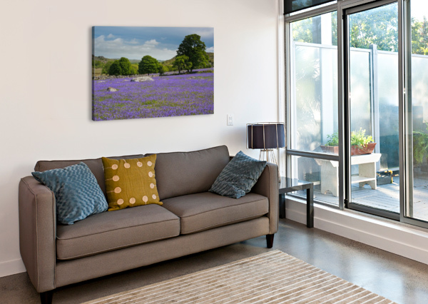 EMSWORTHY BLUEBELLS ANDREW TURNER  Canvas Print