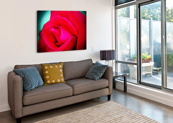 PINK ROSE DON  BAKER  Canvas Print