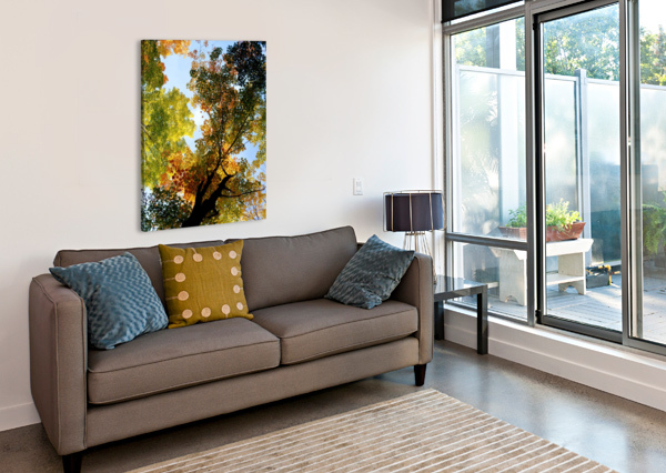 AUTUMN TREES LOW-ANGLE PACIFICSTOCK  Canvas Print