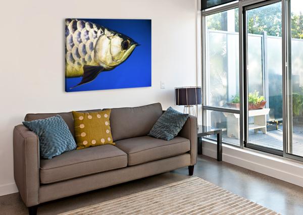 CLOSEUP OF A FISH PACIFICSTOCK  Canvas Print