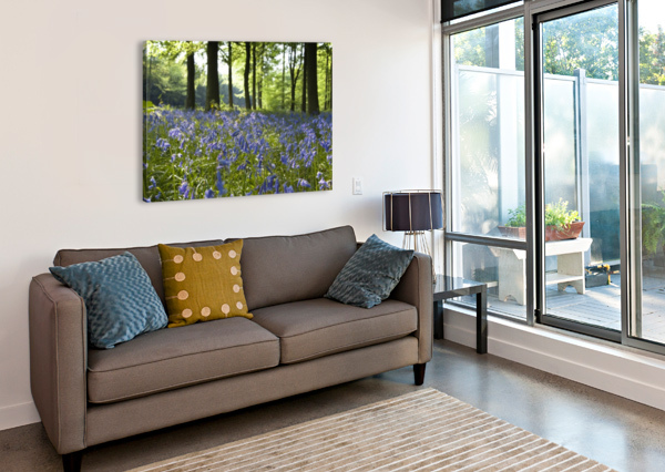 BLUEBELLS ON FOREST FLOOR PACIFICSTOCK  Canvas Print