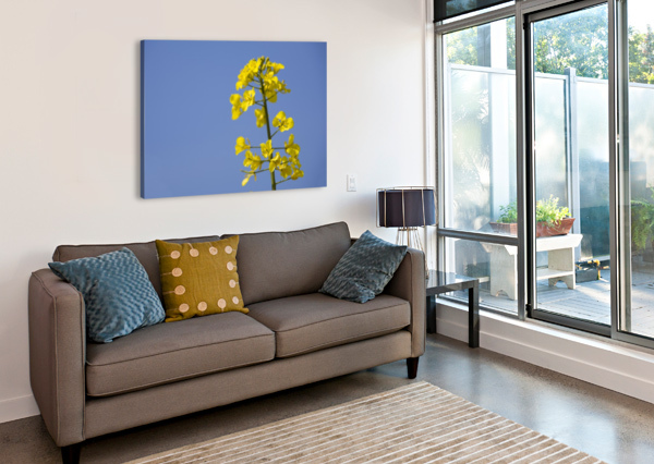 YELLOW FLOWERS PACIFICSTOCK  Canvas Print