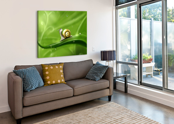 SNAIL STOCK PHOTOGRAPHY  Canvas Print