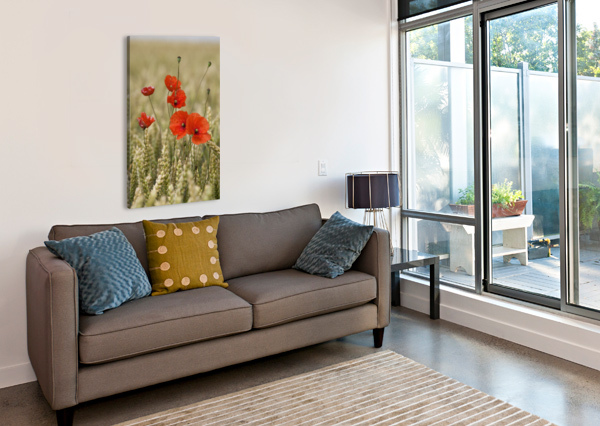 WILDFLOWERS; POPPIES IN A GRAIN FIELD PACIFICSTOCK  Canvas Print