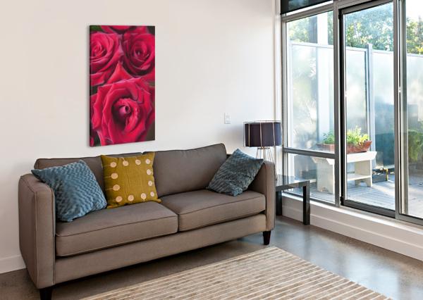 RED ROSES; QUEBEC, CANADA PACIFICSTOCK  Canvas Print