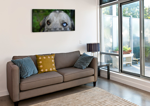 BLUE EYED DOG CAMERON YOUNG  Impression sur toile