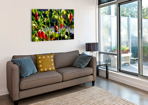 PEPPERS CAMERON YOUNG  Canvas Print