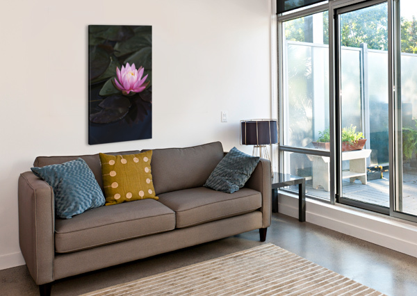 A WATER LILY BLOOMS IN A POND; ASTORIA, OREGON, UNITED STATES OF AMERICA PACIFICSTOCK  Canvas Print