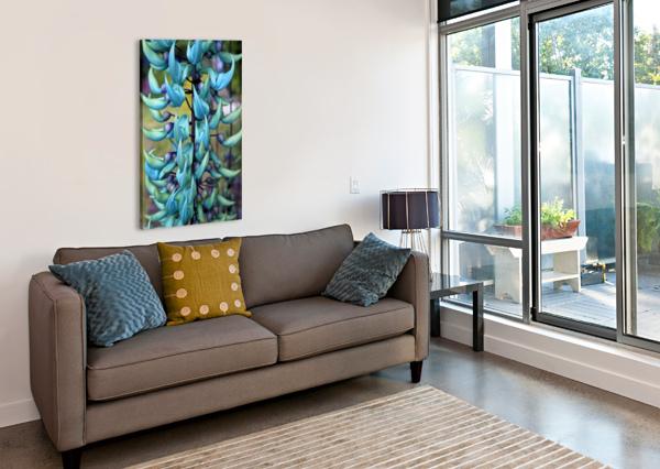 BLUE JADE PLANT; HAWAII, UNITED STATES OF AMERICA PACIFICSTOCK  Canvas Print