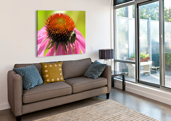 ECHINACEA AND THE BEE IN LINCOLN PARK VP6 VICKI POLIN  Canvas Print