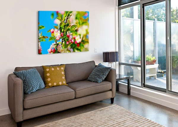 COLORS OF SPRING DON  BAKER  Canvas Print