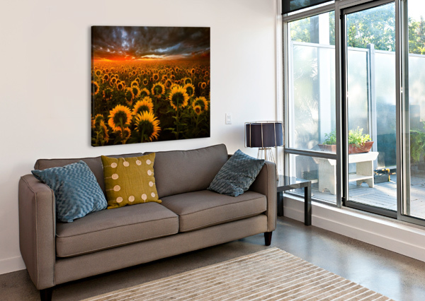 SUNFLOWER FIELD ADRIAN BORDA  Canvas Print