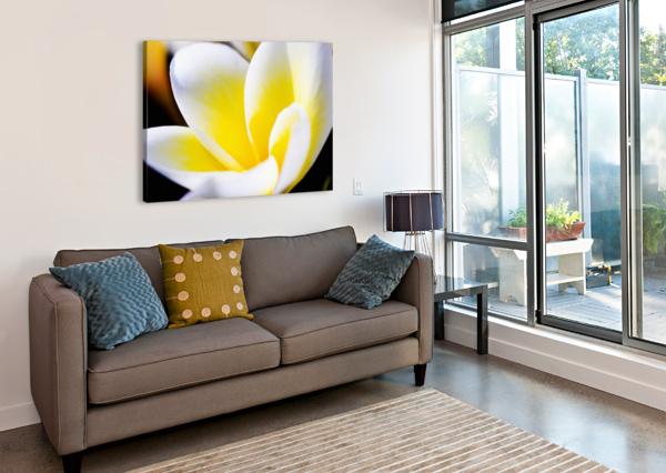 THAILAND, PHUKET, KATA NOI, CLOSE UP OF PLUMERIA FLOWER. PACIFICSTOCK  Canvas Print