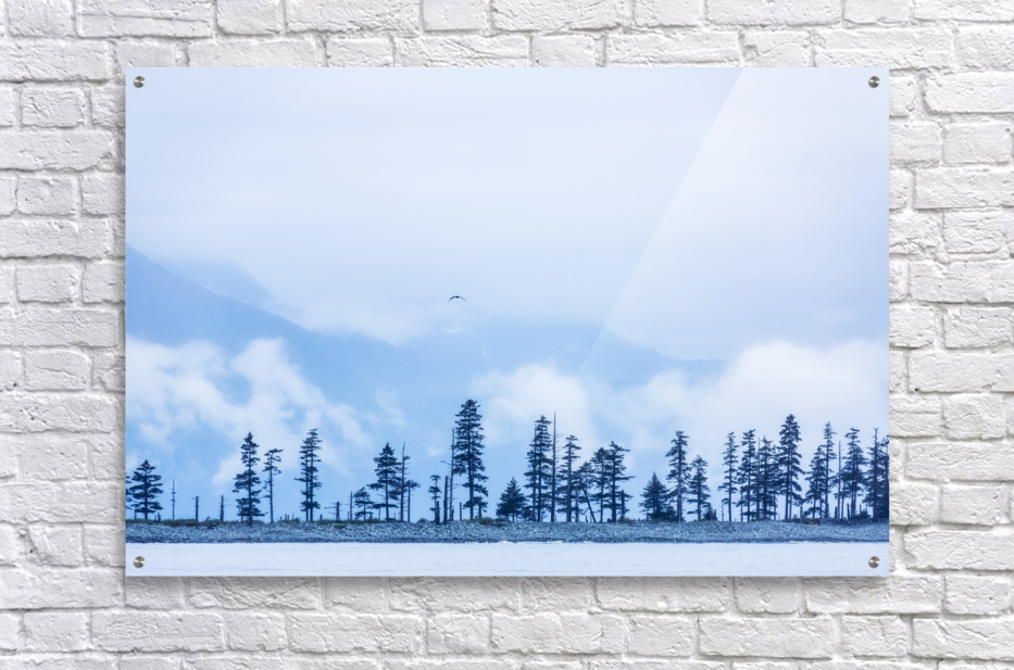 A bird flies above trees under a cloudy sky and fog on the coast of Resurrection Bay, South-central Alaska; Seward, Alaska, United States of America  Acrylic Print