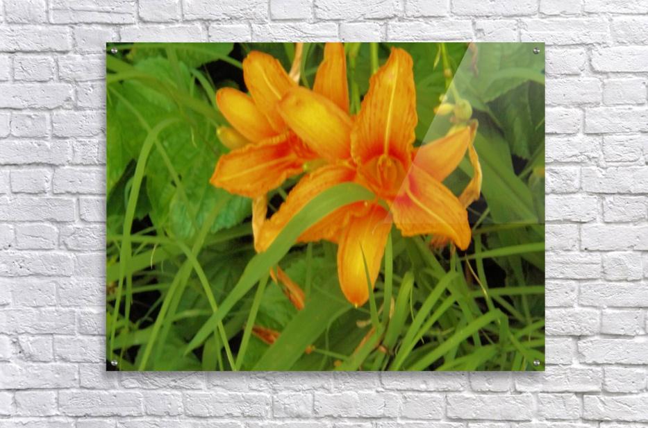 Oranger Lilly 2  Acrylic Print