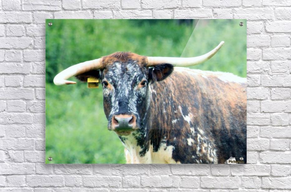 Horns  Acrylic Print