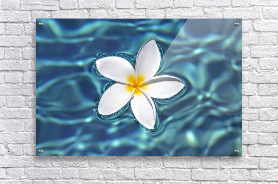 Plumeria flower floating in clear blue water.  Acrylic Print